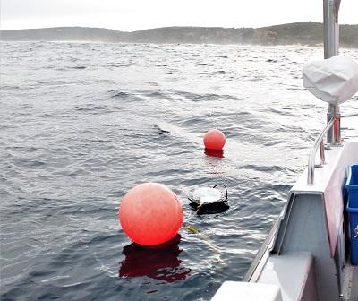 Boost for white shark tagging and monitoring in expanded mitigation program