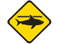 Department of Fisheries surveillance for white shark to continue at Cheynes Beach
