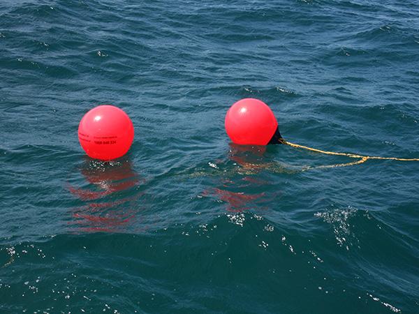 Figures support shark mitigation strategy