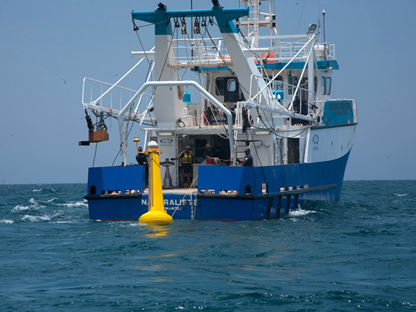 Roll out of tagged shark monitors continues