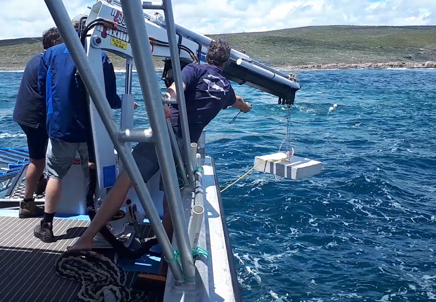 Seabed receivers to track white shark movements in WA