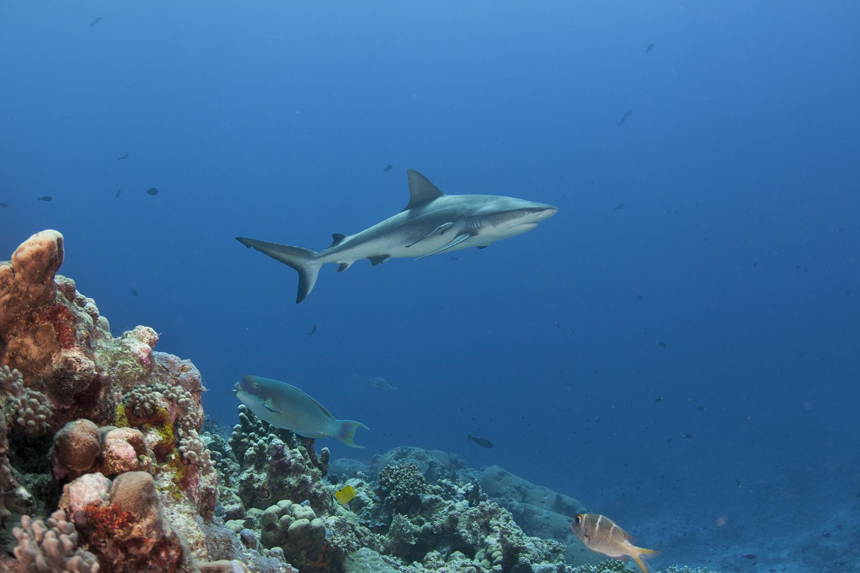 Shark research yields promising results