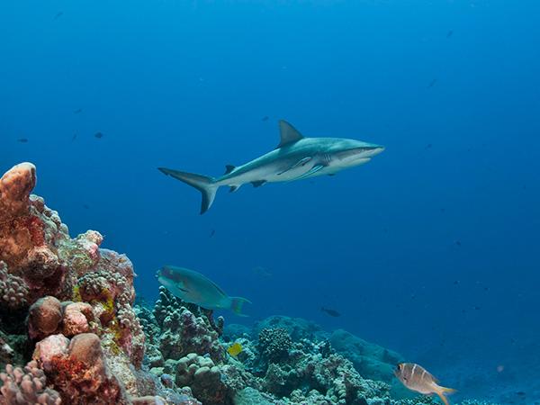 Shark detection and deterrent technologies