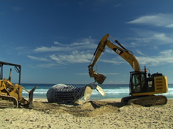 Whale Carcass Management